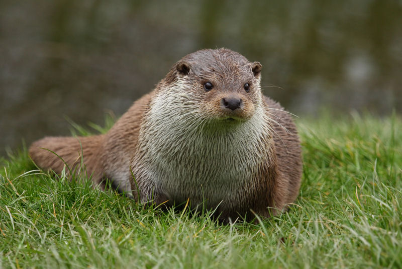 The Nature of Otters