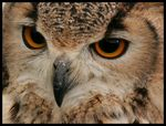 Title: Eagle Owl Camera: Canon 350D / Digital Rebel XT