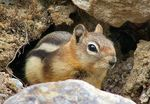 Title: not a chipmunk?