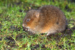 Title: Goodnight Mr Vole