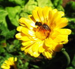 Title: Bee on yellowCanon PowerShot A70