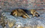 Title: Don't wake up lion when it sleepsCanon PowerShot A70
