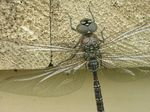 Title: Sleeping DragonFly