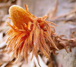 Title: ~Banksia~