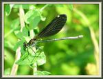 Title: Dragonfly (Yusuf�uk)