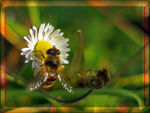 Title: A winter hoverfly