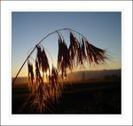 Title: Sunset and Plant