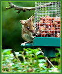Title: Wood Mouse