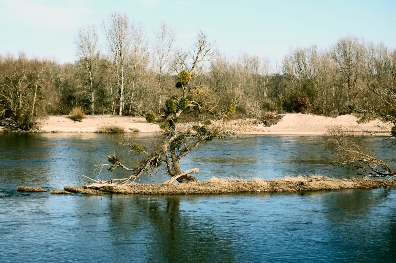 The Wild Loire II