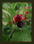 Title: Have a Berry  Nice Day
