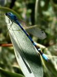 Title: Dragonfly view