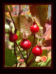 Title: Berry Nice Fall Day