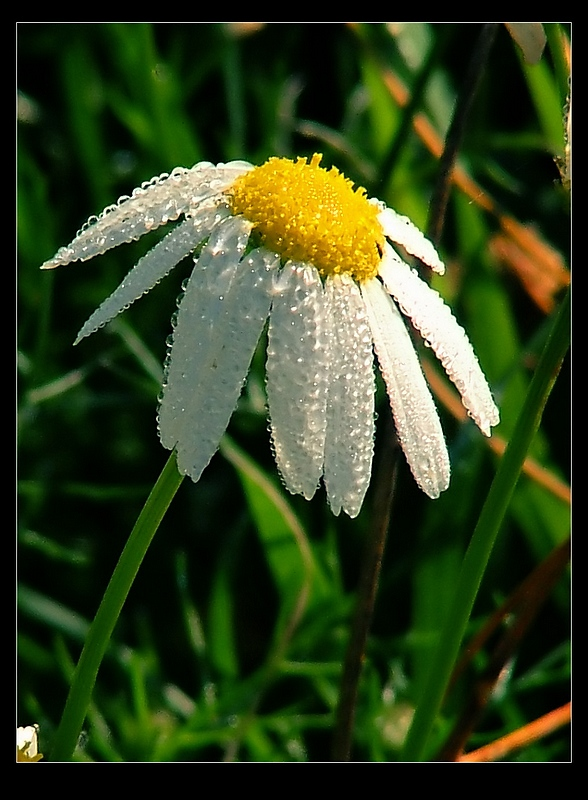 ..:: Mayweed ::..