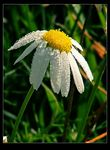 Title: ..:: Mayweed ::..