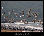 Title: Sea of Seagulls
