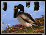 Title: What's up duckCanon PowerShot A700