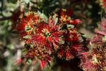 Title: Red FlowerSony Alpha DSLR A300