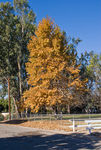 Title: Fall in the Santa Ynez Valley