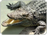 Title: alligatorSony DSC F-828