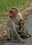 Title: Monkeys on the road...