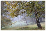 Title: Foggy morning