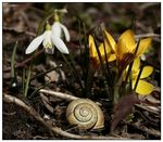 Title: Snail shell and spring flowers