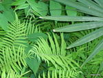 Title: Forest Foliage