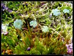 Title: Cosy Moss