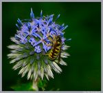 Title: Thistle bee