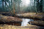 Title: Northern Forest