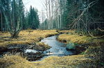 Title: Forest River