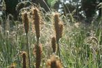 Title: Hairy grass with fly