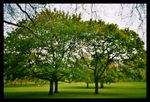 Title: Trees in Green Park