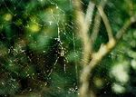 Title: The Web
