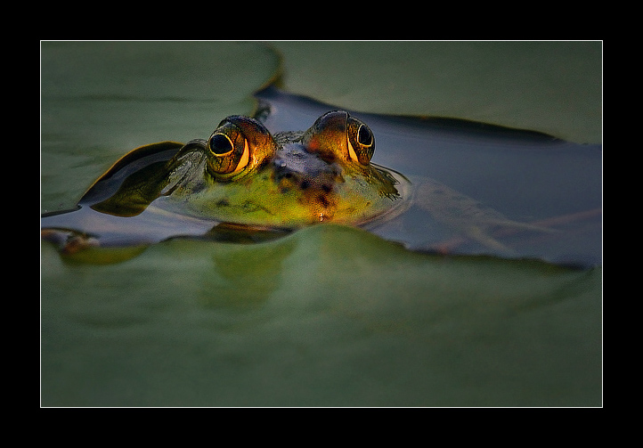 Froggy in the end of day