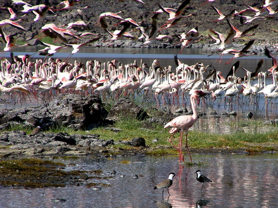 Flamingos at the end of the worlds