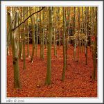 Title: Autumn in Forest[2]