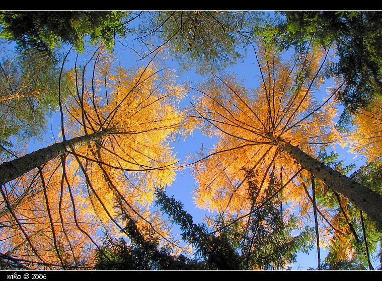 Autumn in Forest[1]