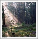 Title: Morning fog in forest