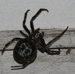 Title: Spider at Night