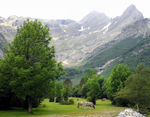 Title: Pineta Valley, Pyrenees