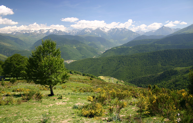 Near Col d'Aspin (Pyrenees,France)