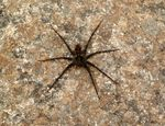 Title: Unidentified spider