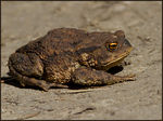 Title: Why is this a Toad?