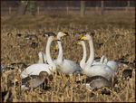 Title: Swan Conference