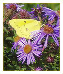 Title: Butterfly View