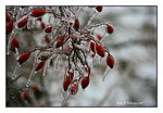 Title: An Ice Storm