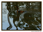 Title: Swimming in Reflections