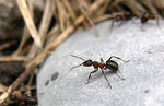 Title: The Guardian Ants