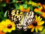 Title: Butterfly (Montreal's botanical garden)